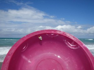 Plastic bowl bit by sea turtle