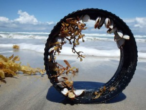 Plastic ring with live goose barnacles