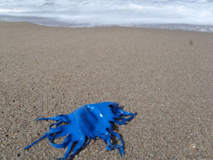 shredded latex balloon on beach
