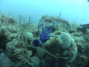 Shredded latex balloon 90 feet under the ocean
