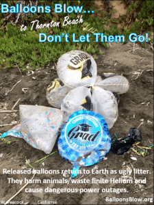 Mylar graduation balloons found polluting Thornton Beach.