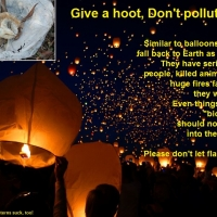 Sky Lantern - Not a balloon, but equally dangerous