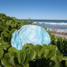 mylar balloon in seagrapes