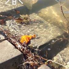 Latex balloon pollution in water