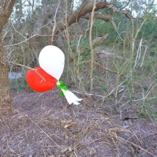 Latex balloons in tree on Hatteras Island, NC