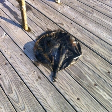 Mylar balloon found on the bottom of a harbor in Lake Michigan