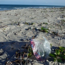 Mylar balloon polluting pristine beach