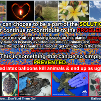 Released balloons kill animals and end up as ugly litter - all preventable
