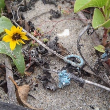Small blue bits of latex balloon in flowering seagrass