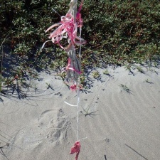 latex balloon and strings polluting beach
