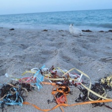 balloon pollution picked up before the sea turtles hatch