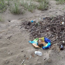 flotsam and jetsam washed up into the dunes with the seaweed