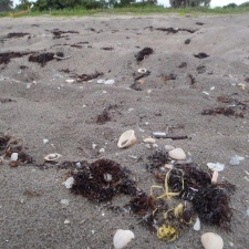 latex balloon beside a sea turtle nest