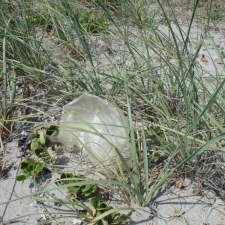 mylar balloon in sea grapes and grass