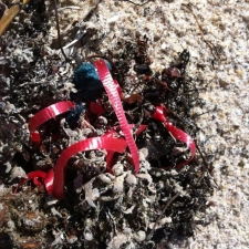 red ribbon and latex balloon piece littering beach
