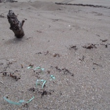 ribbon and latex balloon (under the sand) upon a sea turtle's nest