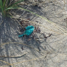 small piece of balloon polluting sand dune