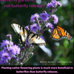 Butterfly gardens - not butterfly releases