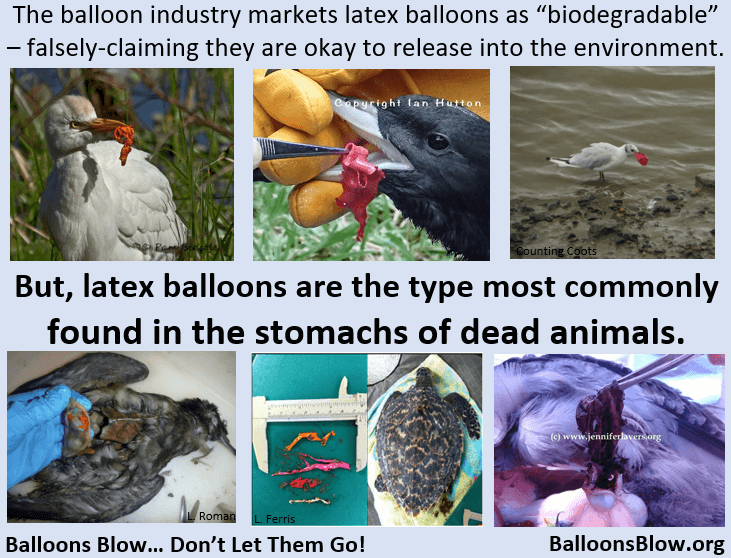 Photos of dead animals with balloons in stomach, strangled by string