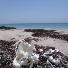 Broken white latex balloon washed ashore