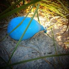 Latex balloon in sea oats on Melbourne Beach, FL