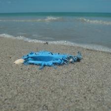 Latex Balloon Trash on Beach