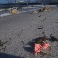 Latex Balloons Trash on Beach