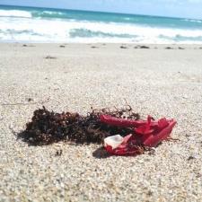 Red latex balloon burst on beach