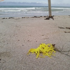 Shredded latex balloon on sea turtle nest