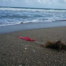 Latex balloon in sargassum on beach
