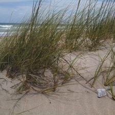 mylar balloon on ocean dune