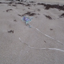 Mother's Day balloon rests on a mother sea turtle's nest
