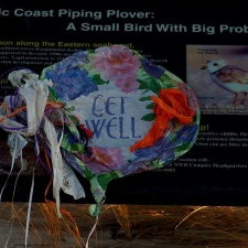 Atlantic Coast Piping Plover - Balloon Pollution