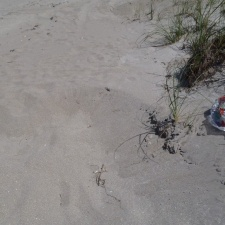 Balloon Litter on Beach near Sea Oats