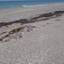 Balloon on protected sea turtle nest