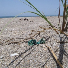 Balloon pieces hiding in sea oats