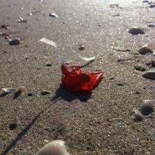 Bit of latex balloon and ribbon littering Space Coast, FL beach
