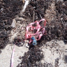Burst blue balloon with pink ribbon in sargassum