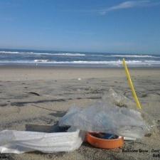 Coquina Beach Cleanup
