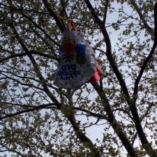 Birthday Mylar balloon stuck in tree - Newark, NJ