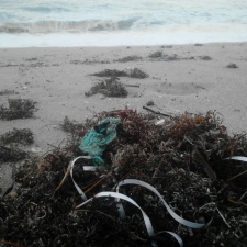 Latex balloon and plastic ribbon - beach litter