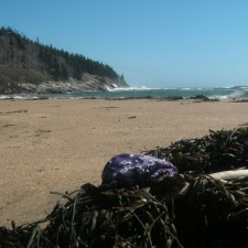Latex balloon on Sand Beach, Acadia National Park in Maine