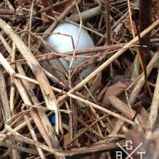 latex balloon litter in vegetation