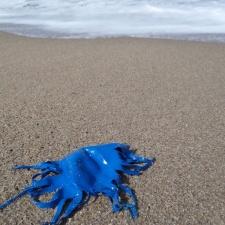 shredded latex balloon on beach