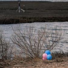 Latex balloons near bird nesting