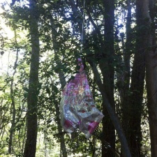 Mylar balloon hanging in the middle of forested habitat in New Jersey