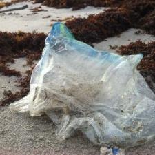 Mylar balloon polluting Space Coast, Florida beach