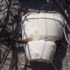 Old styrofoam cup being constricted by the rotting beach fence wire
