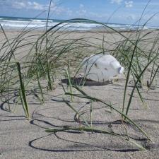 plastic pollution - jug on beach