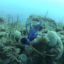 Shredded latex balloon 90 feet under the ocean